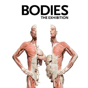 Bodies--The-Exhibition-Tour-Luxor-Hotel-and-Resort-Las-Vegas-Nevada-Museums-and-Landmarks-Recommendation-Rentabususa.com.jpg